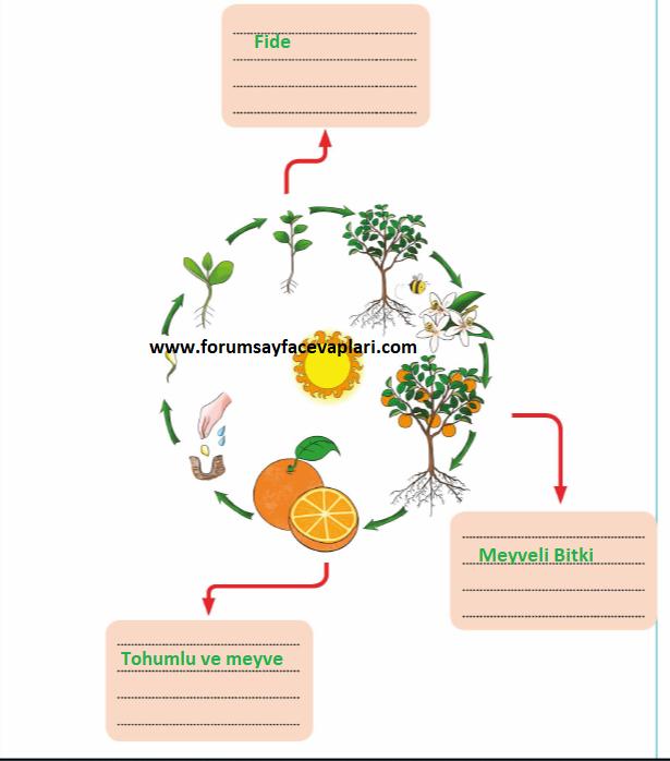3. Sinif Fen Bilimleri Calisma Kitabi Meb Yayinlari Sayfa 100 Cevaplari